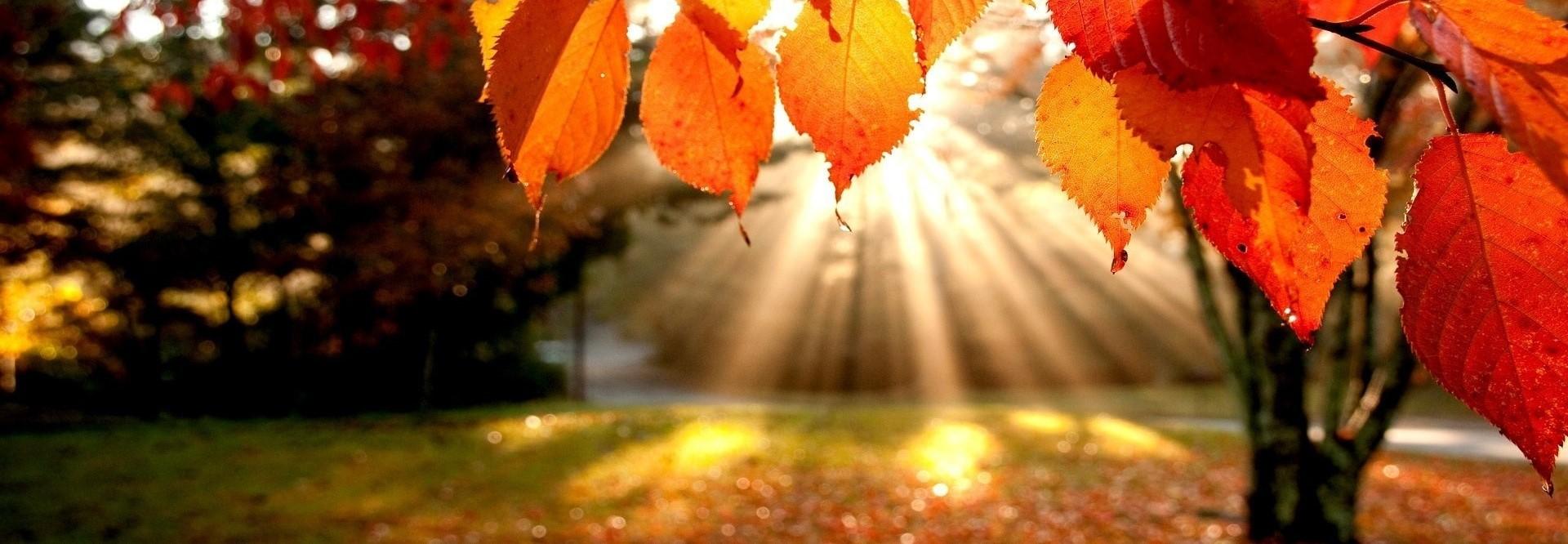 🍁 Осень 2020 🍂 🎁Скидка на сервис -10% (🔑 Код акции:...